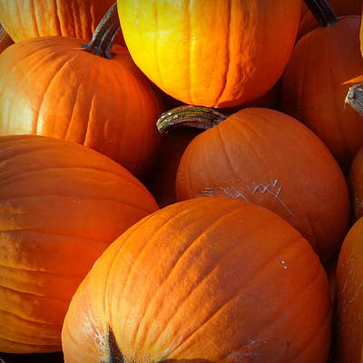 Photograph - Pumpkins by Joseph Skompski