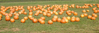 Photograph - Pumpkins by Lee Hartsell