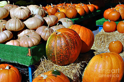 Photograph - Pumpkins by Linda Cox