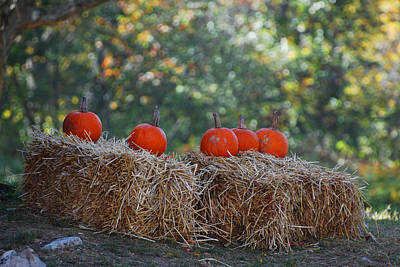 Photograph - Pumpkins by Lorena Mahoney