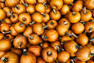 Photograph - Pumpkins by Mark Miller