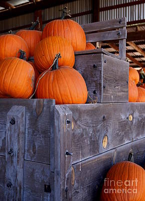 Photograph - Pumpkins On The Wagon by Kerri Mortenson
