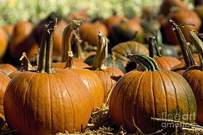 Photograph - Pumpkins by Peggy Hughes