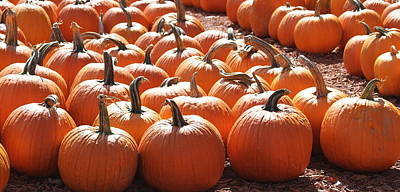 Christmas Photograph - Pumpkins Pumpkins And More Pumpkins 2 by Cathy Lindsey