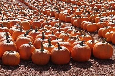 Caravaggio - Pumpkins pumpkins and more pumpkins 3 by Cathy Lindsey