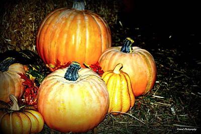 Photograph - Pumpkins Pumpkins by Debra Forand