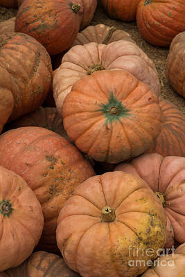 Photograph - Pumpkins by Suzanne Luft