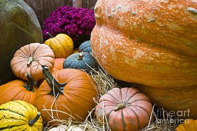 Pumpkins Art Print by Tim Hightower
