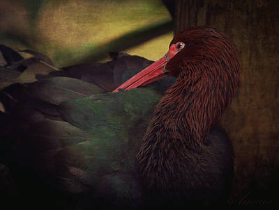 Ibis Digital Art - Puna Ibis by Maria Angelica Maira
