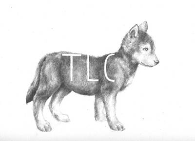 Wolf Drawing - Pup by Alexander M Petersen