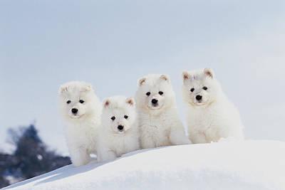 Puppies In Snow Art Print by Mitsuyoshi  Tatematsu