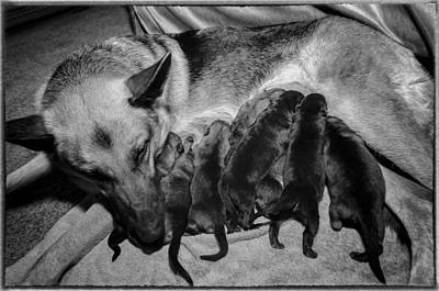 Photograph - Puppies Nursing by Tom Zachman