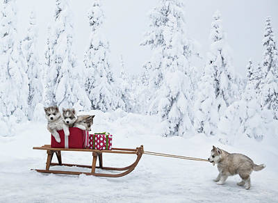Dog Photograph - Puppies With A Sled Full Of Christmas by Per Breiehagen