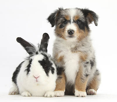 House Pet Photograph - Puppy & Rabbit by Mark Taylor