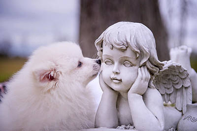 Endearing Photograph - Puppy And Angel  by Bonnie Barry