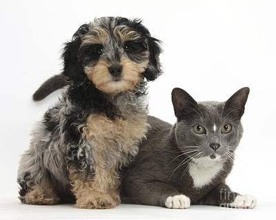 House Pet Photograph - Puppy And Cat by Mark Taylor