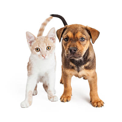 Puppy And Kitten Standing Together Art Print by Susan Schmitz