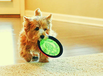 Digital Art - Puppy At Play by Susan Stone