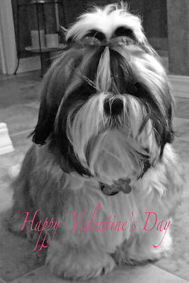 Photograph - Puppy Bijou Valentine Greeting Card by Glenna McRae