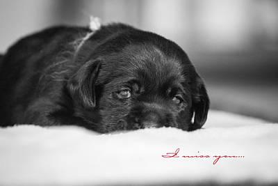 Black Lab Digital Art - Puppy Black Lab  by Toni Thomas