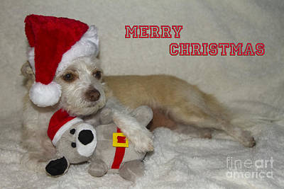 Photograph - Puppy Christmas Toy by Photography by Laura Lee