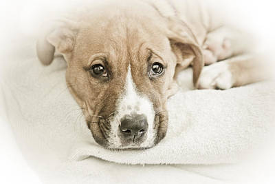 Photograph - Puppy Dog Eyes by Kathy Nairn