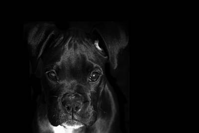 Brindle Photograph - Puppy Eyes by Stephanie McDowell