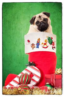 Puppy For Christmas Art Print by Edward Fielding