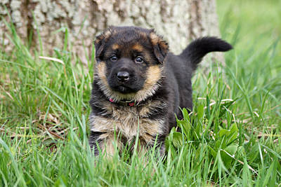 Photograph - Puppy In Grass by Sandy Keeton