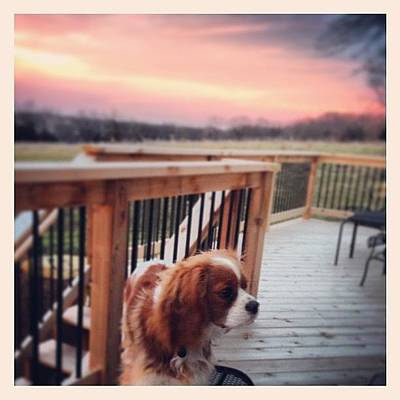 Dog Photograph - Puppy In Sunset by Kay Pickens