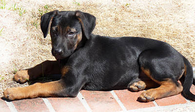 Puppy Photograph - Puppy In The Sun by Rhonda Chase