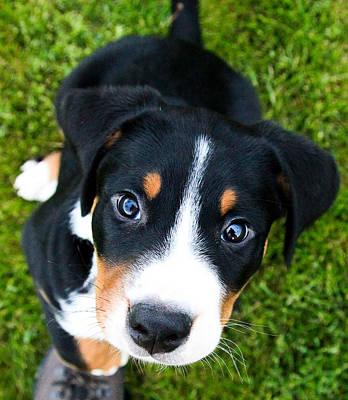 Swiss Photograph - Puppy Love by Aaron Aldrich