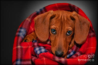 Dachshund Art Photograph - Puppy Love by Susan Candelario