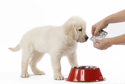 Pet Care Photograph - Puppy Receiving Medicine by Jean-Michel Labat