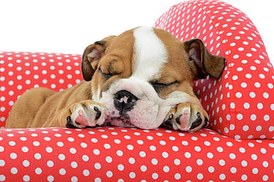 Puppy Red In Chair Sleeping Art Print