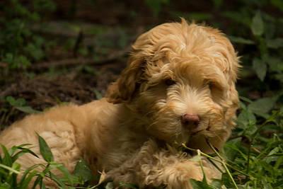 Photograph - Puppy Sweetness by Sandra Clark
