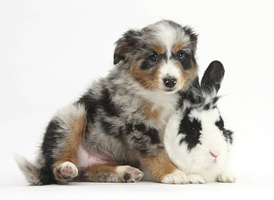House Pet Photograph - Puppy With Rabbit by Mark Taylor