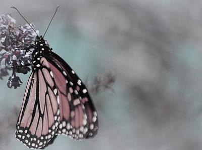Butterfly Photograph - Pure Gentleness by The Art Of Marilyn Ridoutt-Greene