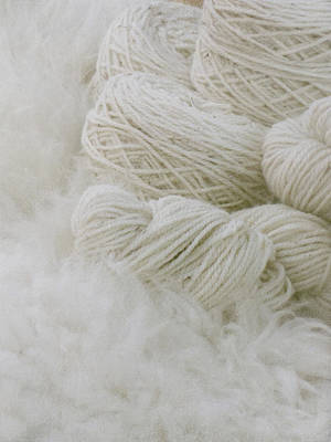 Ottawa Photograph - Pure Natural Wool by Francois Dion
