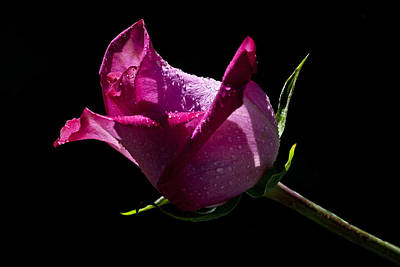 Art Print featuring the photograph Pure Pink by Doug Norkum