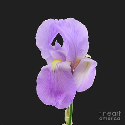 Purple Iris Art Print by Scott Cameron