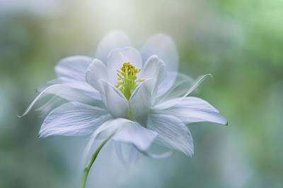 Delicate Photograph - Purity by Jacky Parker