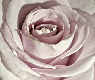 Photograph - Purity by Ruth Edward Anderson