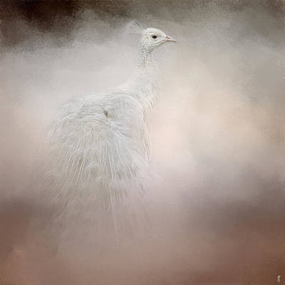 Photograph - Purity - White Peacock - Wildlife  by Jai Johnson