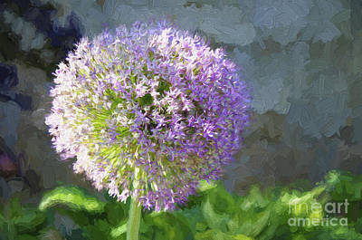 Photograph - Purple Allium 2 Hollandicum Sensation  by Andee Design