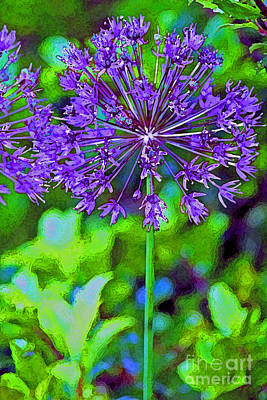 Photograph - Purple Allium Flower by Karen Adams