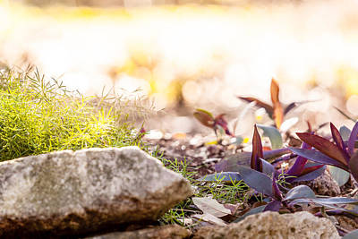 Photograph - Purple And Green by Melinda Ledsome