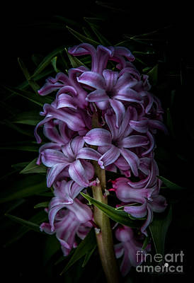 Photograph - Purple And Green by Ronald Grogan