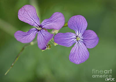 Photograph - Purple And Green by Wanda Krack