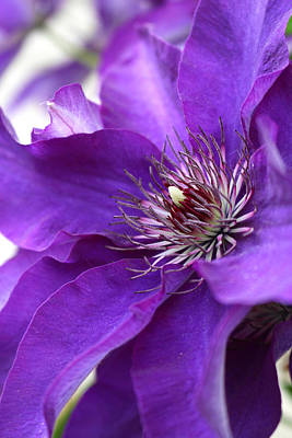 Photograph - Purple And Light by Veronica Vandenburg